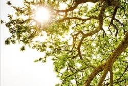 Apprivoiser le stress & les émotions par la Pleine Conscience